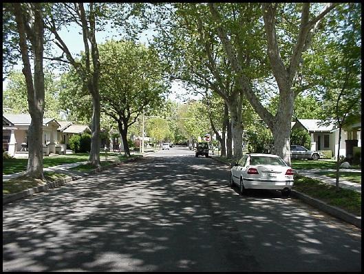 529_tree_lined_street_1